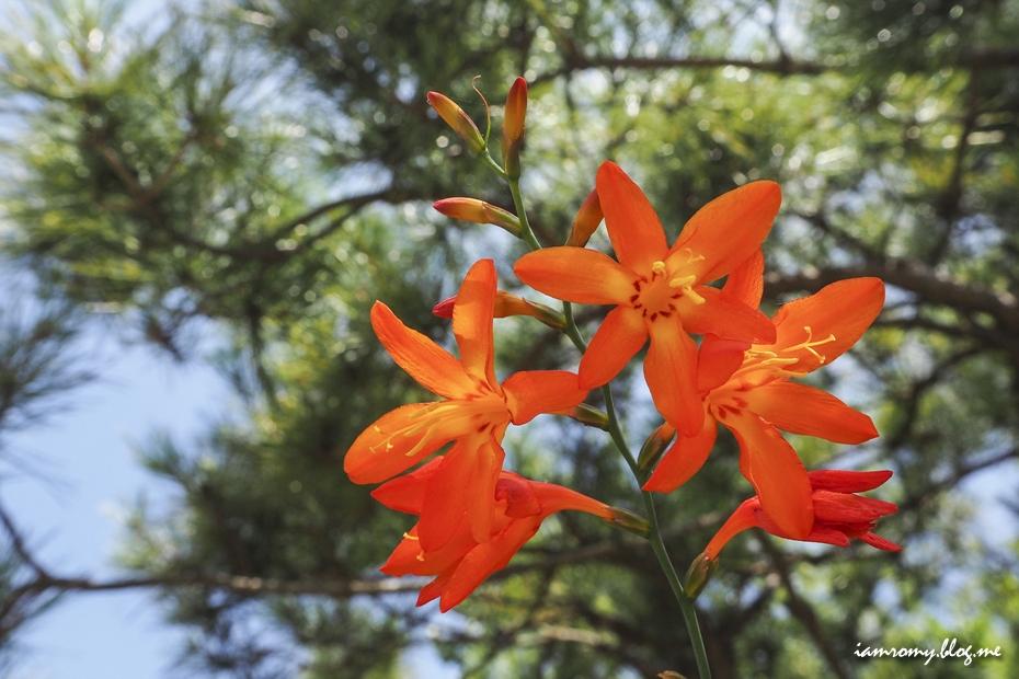 피어난 붉은 꽃