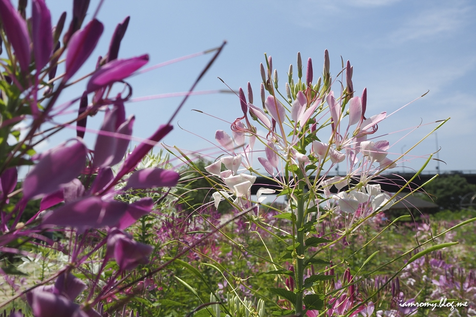 들판 위에 보라색 꽃
