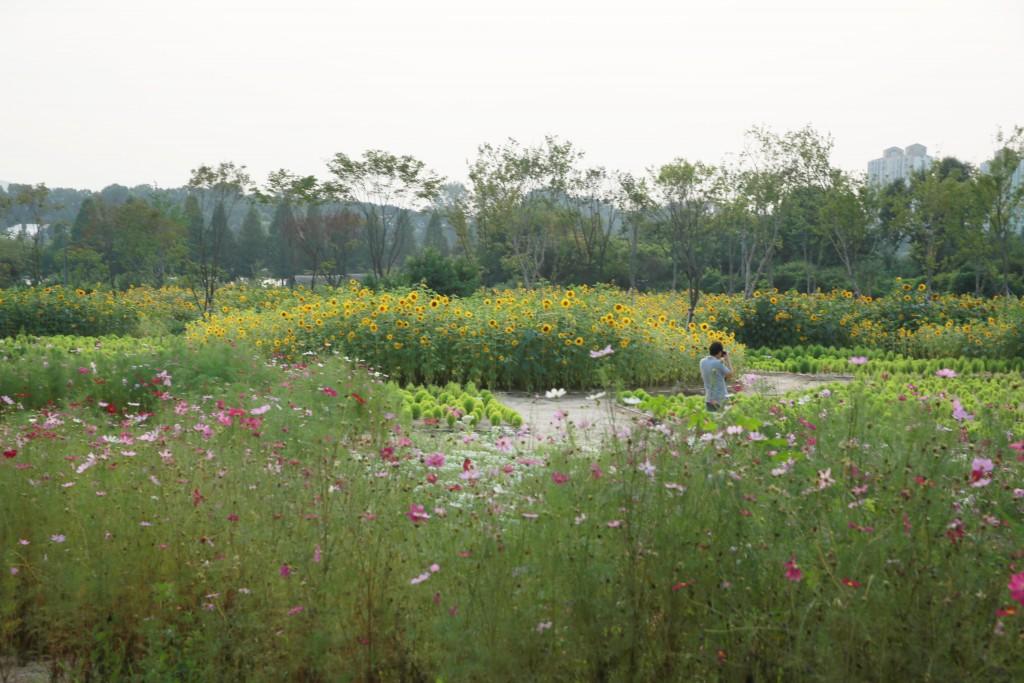 일월공원 전경
