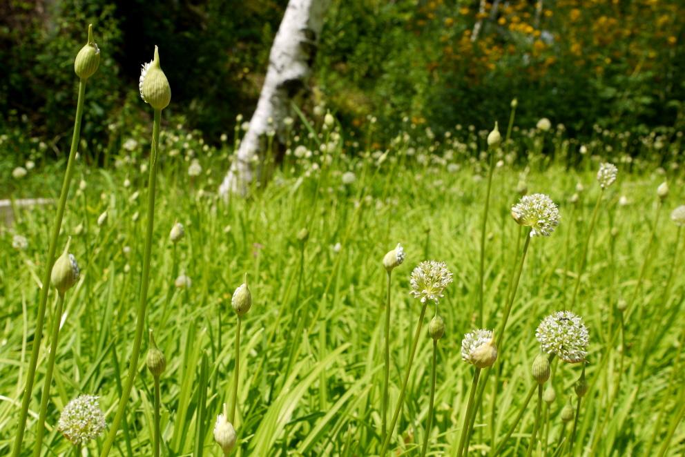숲에 가득한 식물들