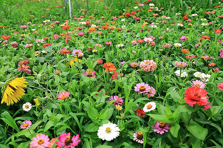다양한 꽃들