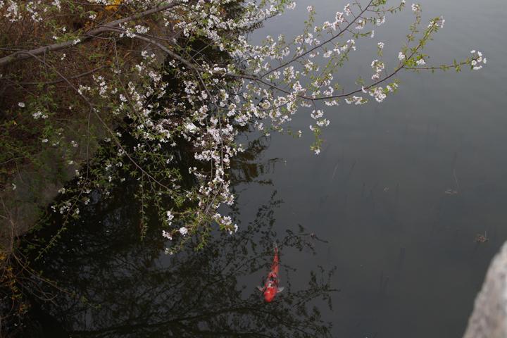 봄날의 일산 호수공원