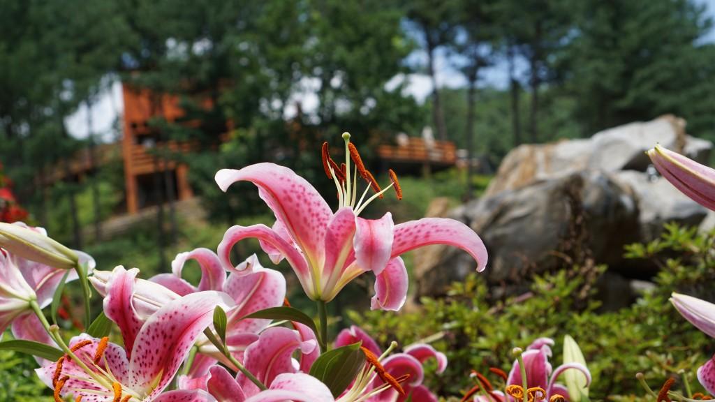 붉게 핀 꽃