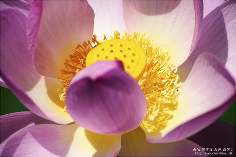 연꽃의 확대 사진