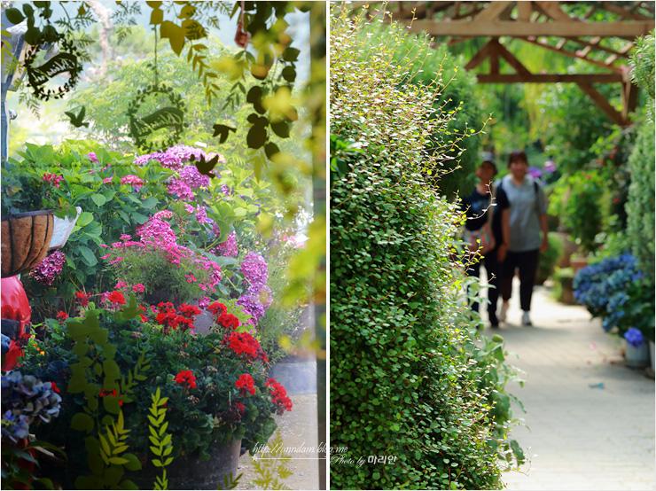 식물원과 관람객들