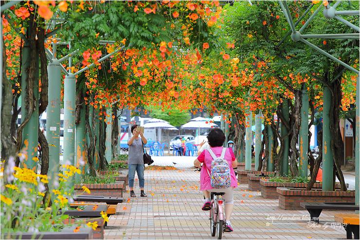 꽃길을 걷는 사람들