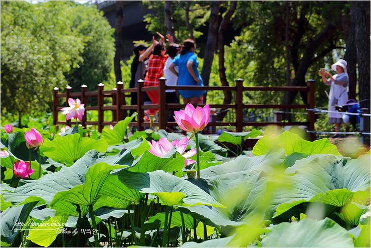연못을 배경으로 사진을 찍는 관람객들