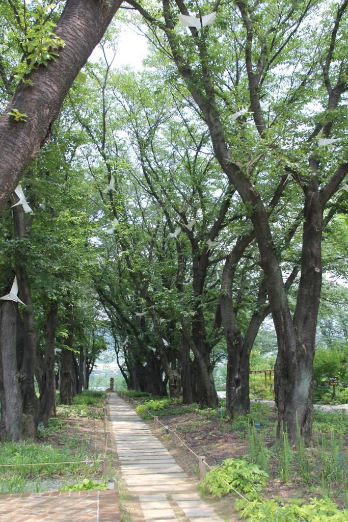 산책을 할 수 있는 숲길