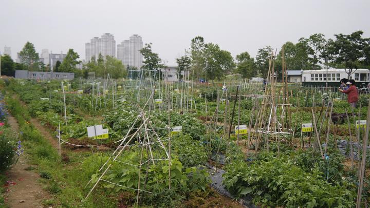 문화동산 농장