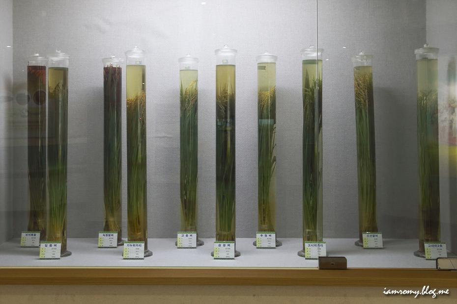 농업박물관 벼 품종