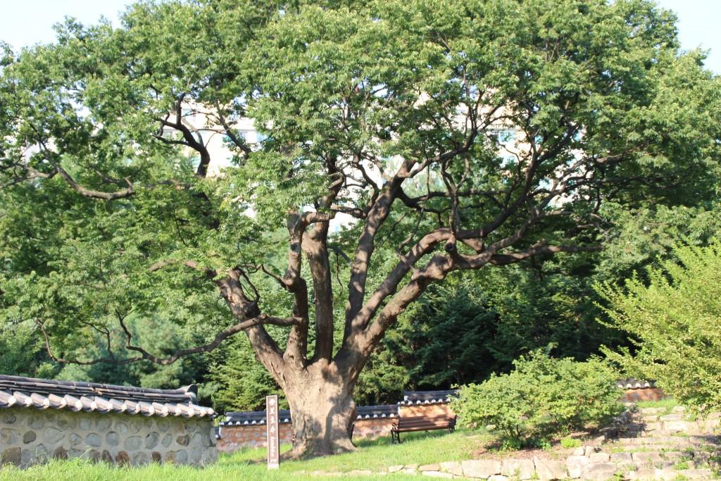 거대한 나무