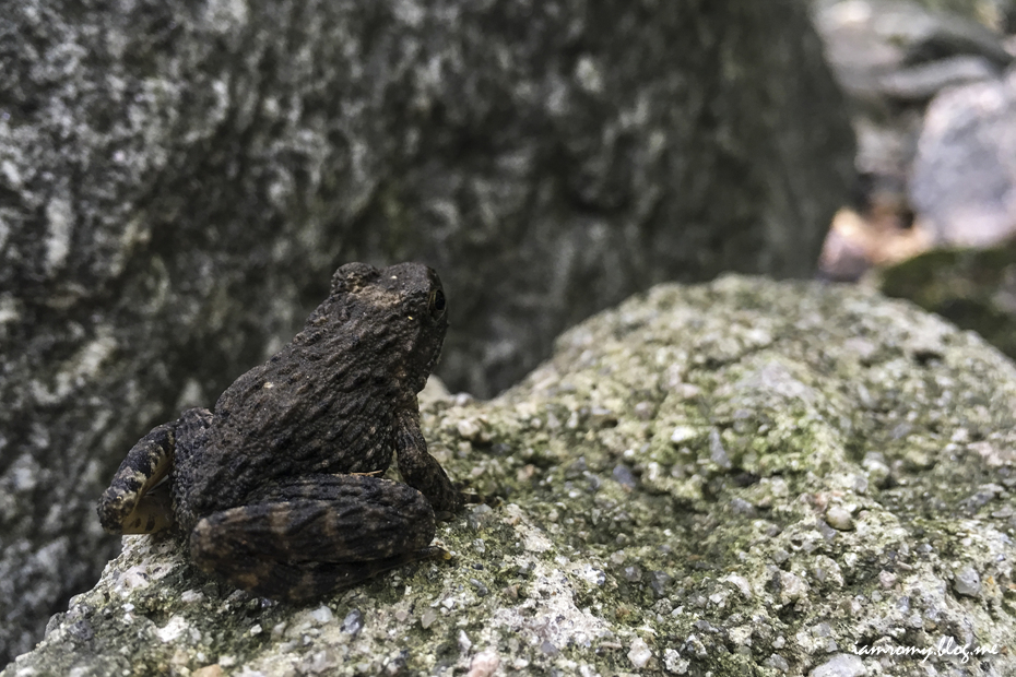 바위에 앉아있는 개구리