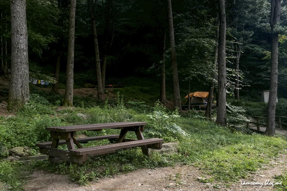 잣나무 숲과 의자