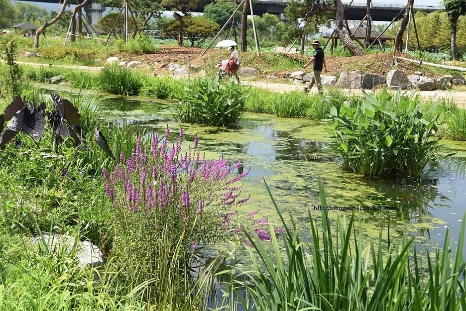 산책로 옆 수풀이 우거진 연못