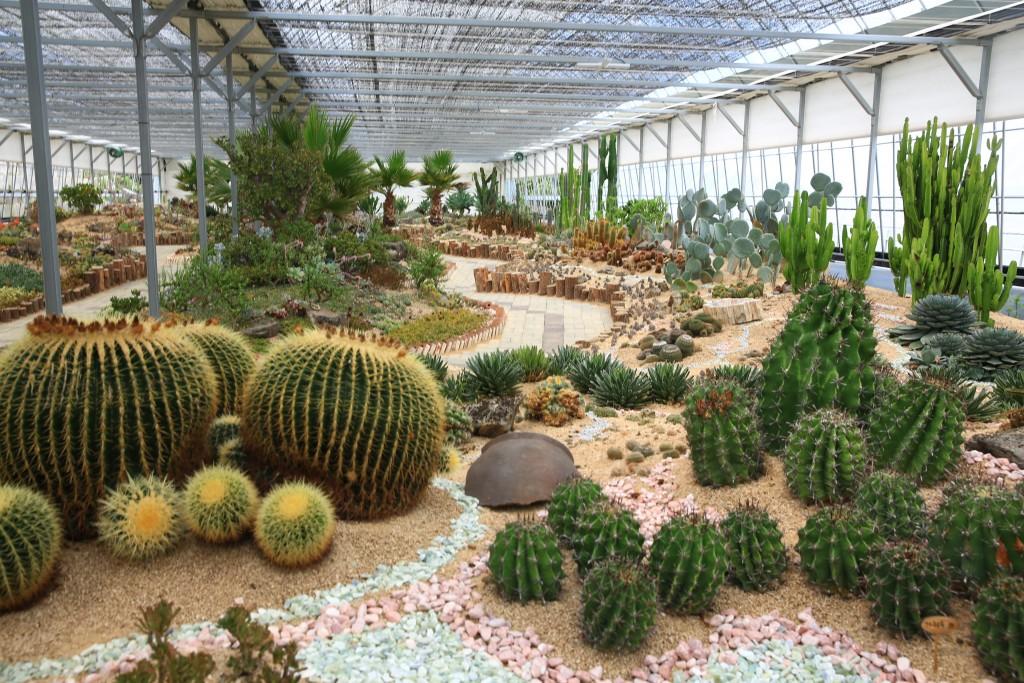 다육 식물원