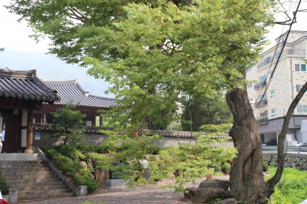 250년된 느티나무와 뒤편으로 보이는 이택재