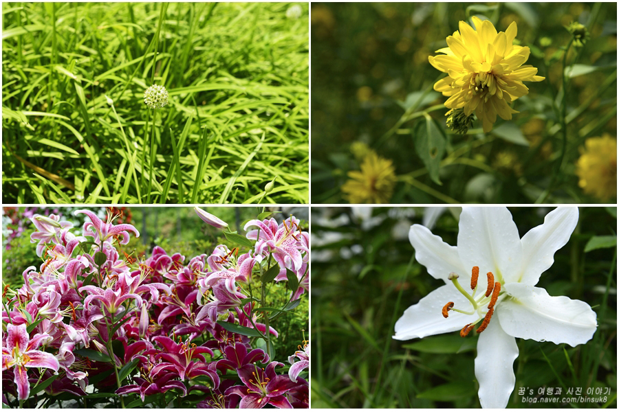 산나물과 들꽃들