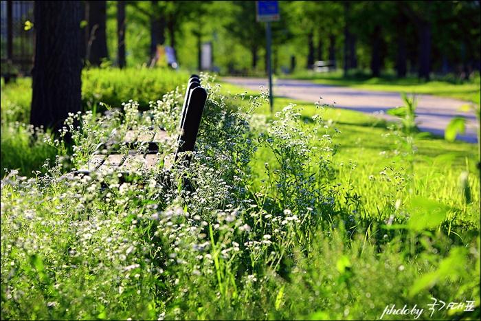 산책로에 피어난 들꽃과 쉴 수 있는 벤치