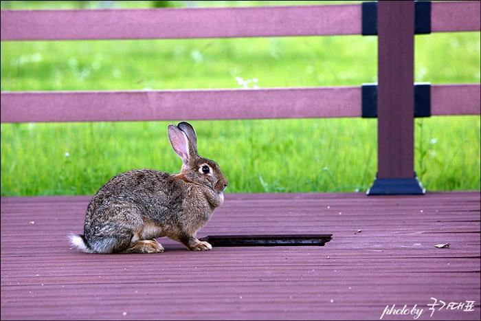 산책로를 노니는 토끼