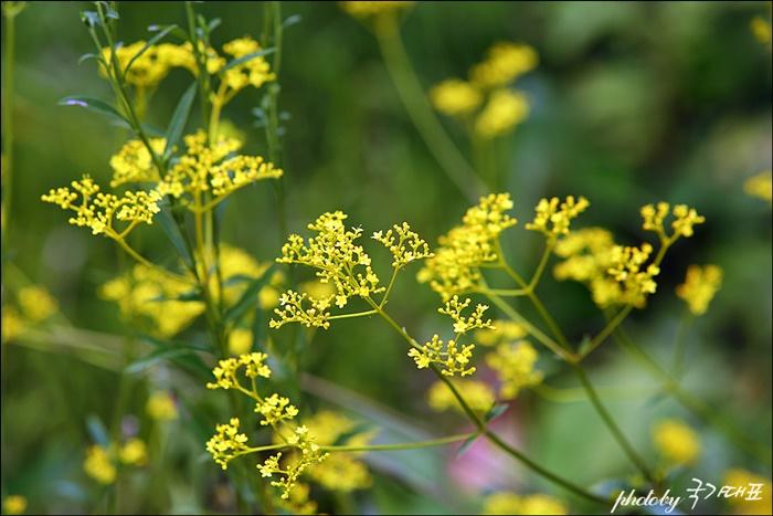 수목원의 꽃들