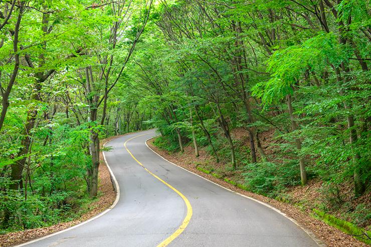 구불구불한 숲길