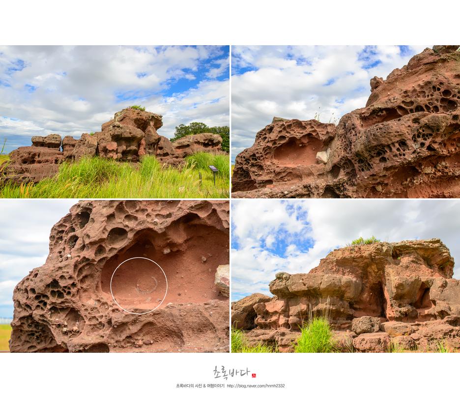 공룡알 화석이 발견된 바위