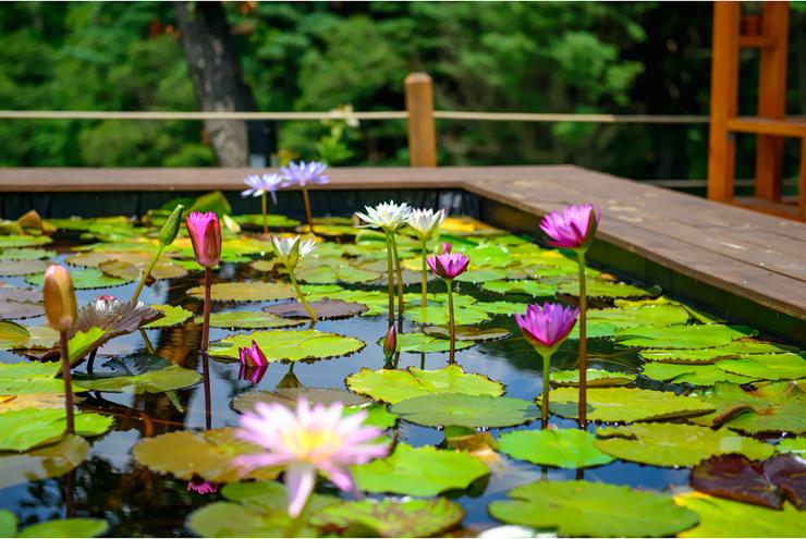 연못 풍경