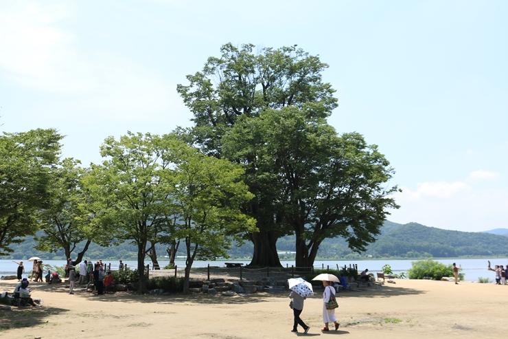 400년 수령의 느티나무