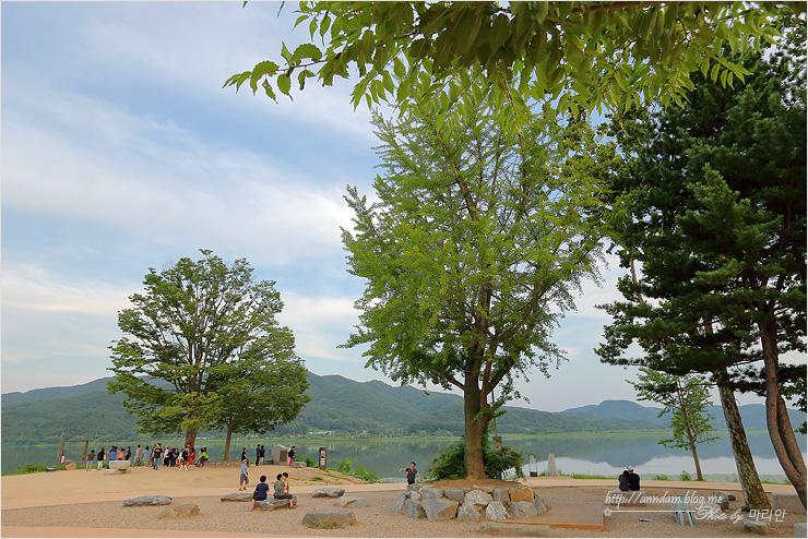 커다란 나무들과 쉬는 사람들