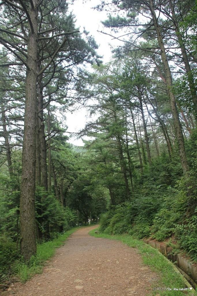 산림욕장 풍경