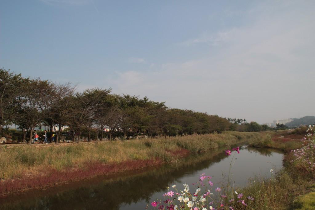시흥갯골,쌈밥 153