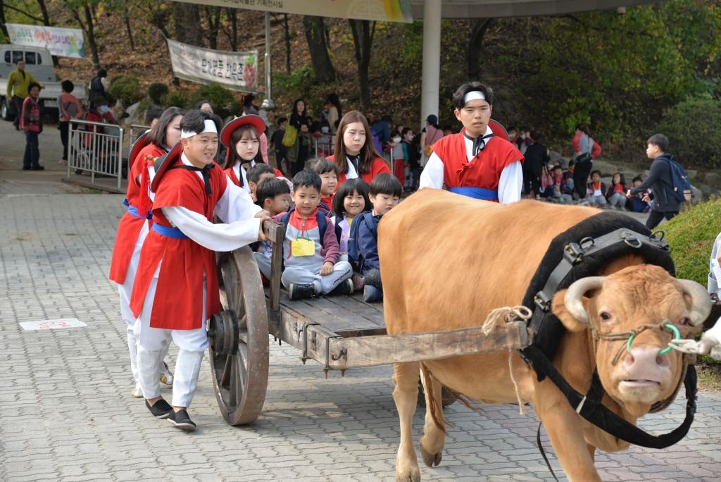 이천쌀문화축제에서 소가 끄는 수레 체험을 하는 어린이들