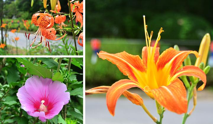 꽃의 개화