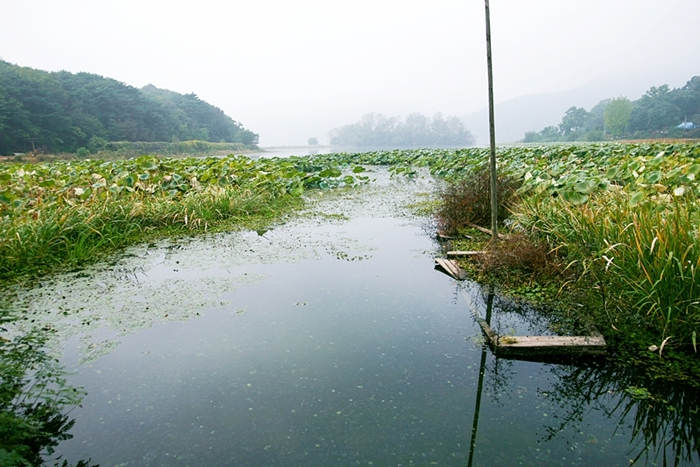 다산생태공원 018