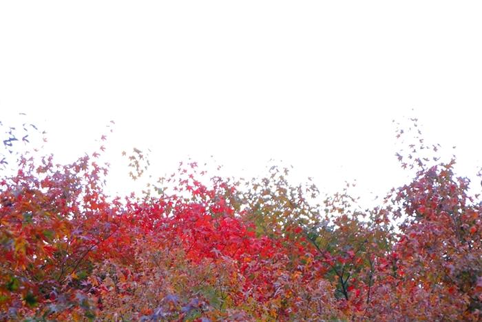 서후리숲 006