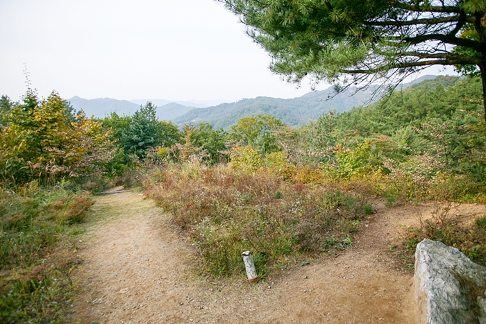 서후리숲 010