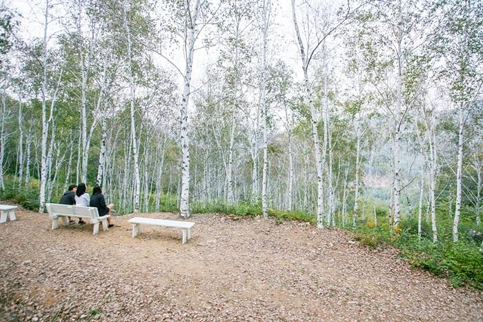 서후리숲 014