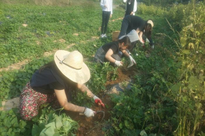 안성 인처골  농촌체험마을