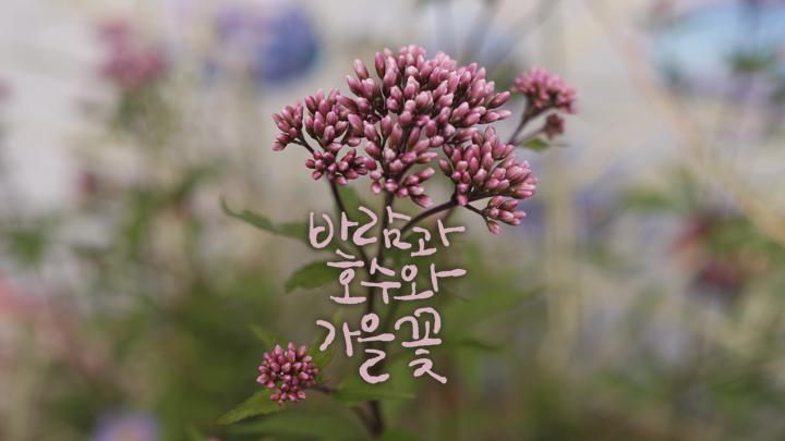 경기도 고양 추천여행 – 마음속의 경기도 137. 고양 가을꽃축제