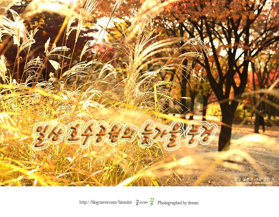 2016.11.11일산호수공원의늦가을풍경