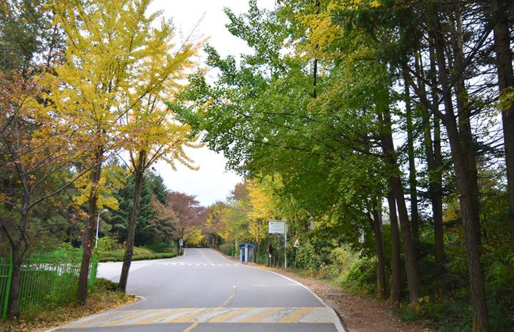 종마공원 인근도로