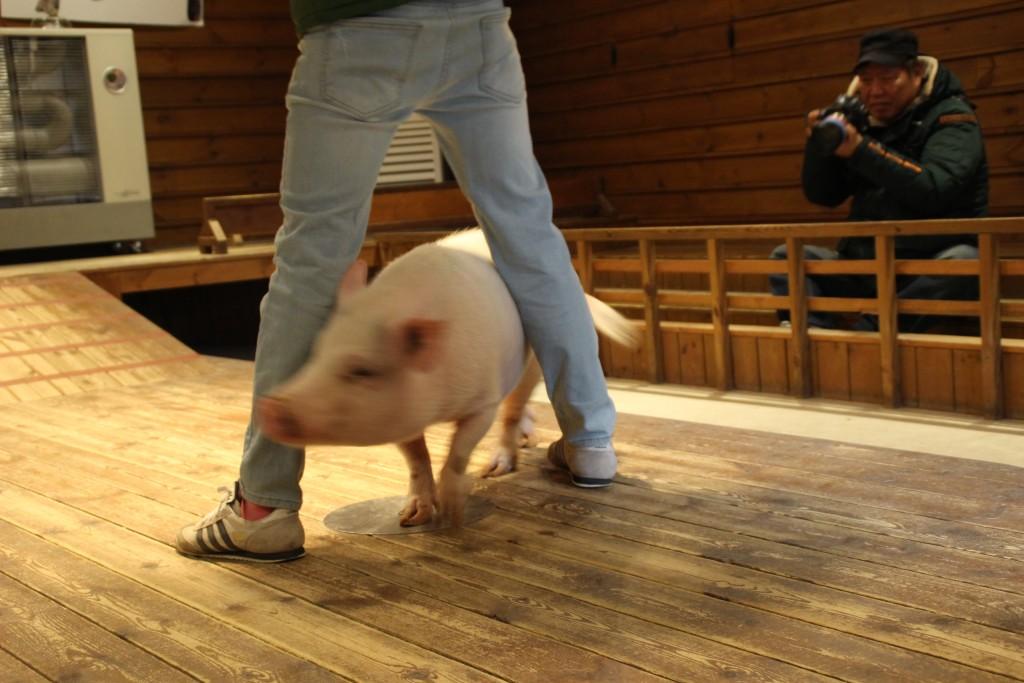 와우목장,돼지박물관 063