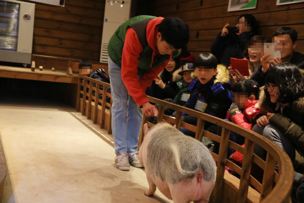 공연장에서 돼지와 친숙해지는 아이들
