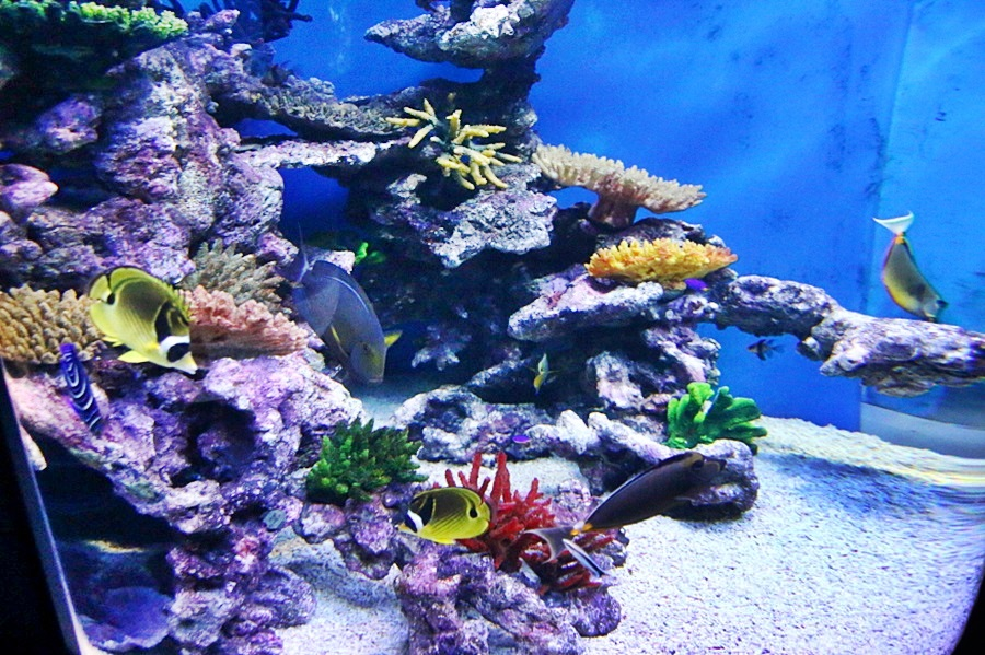수족관 물고기들