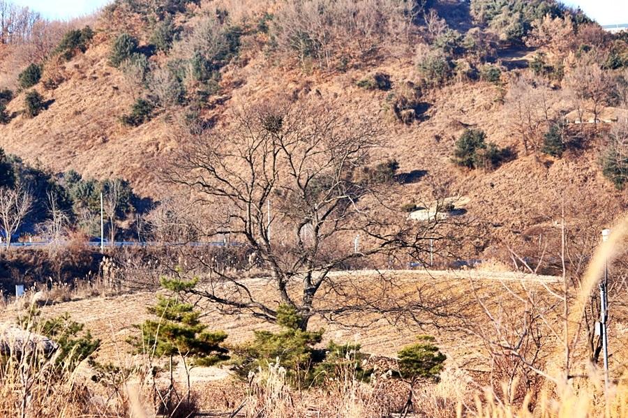 산기슭 주상절리