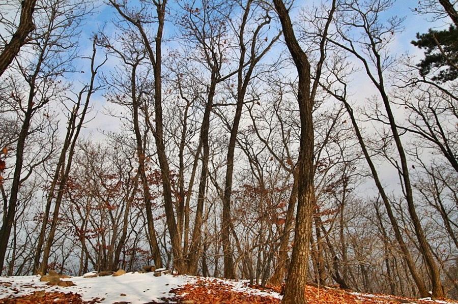 하늘과 눈이 쌓인 낙엽들