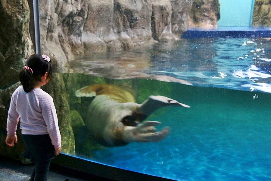 바다코끼리를 구경하는 아이