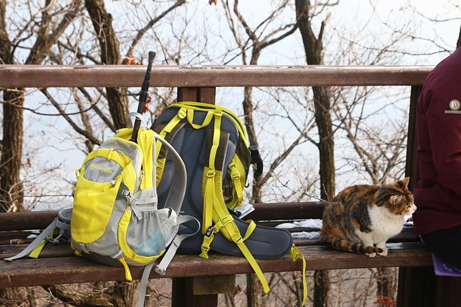 등산가방과 고양이