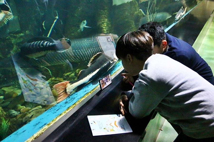물고기를 자세히 관찰하는 사람들