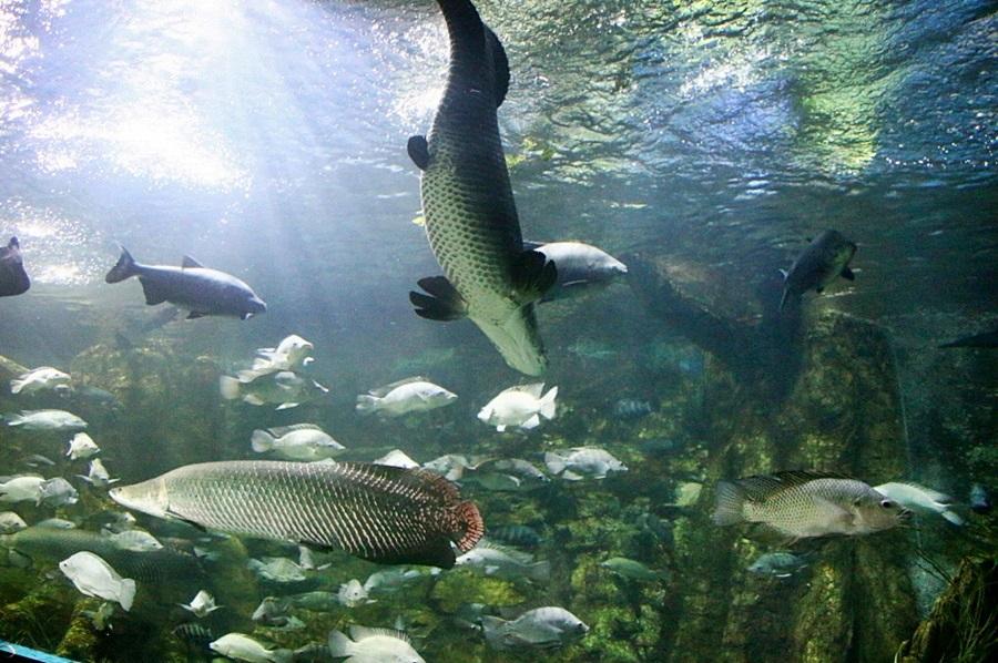 대형 물고기들